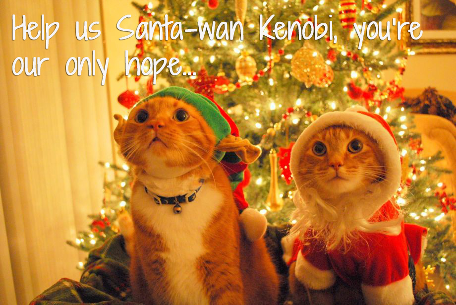 Two cats in christmas hats with caption 'Help us Santa-wan Kenobi, you're our only hope'